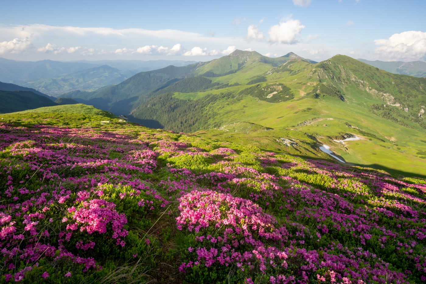 Blooming Rodnei mountains