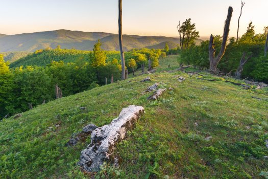 Essence of Little Carpathians