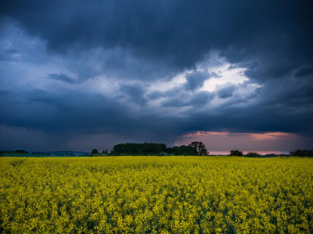 Rape field and storm